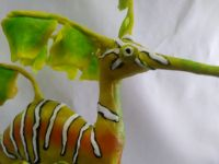 Leafy seadragon with pollution